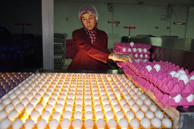 Yeni dönem tüketiciye yarayacak yumurtanın daha taze tüketilmesi sağlayacak