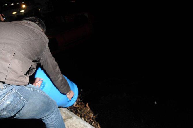 Çanakkale'de kaçak avlanmış 'deniz patlıcanları' ele geçirildi