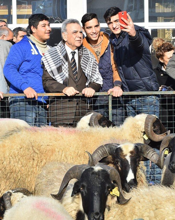 İzmir Büyükşehir Belediyesi üreticiye küçükbaş hayvan dağıttı