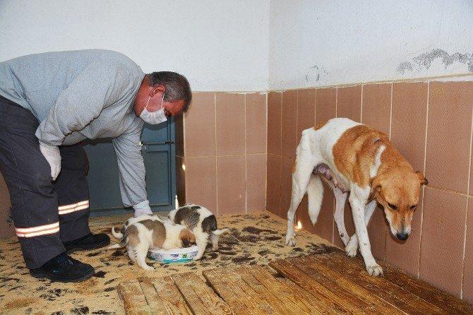Torbalı'da Sokak Hayvanlarına Beş Yıldızlı Bakımevi