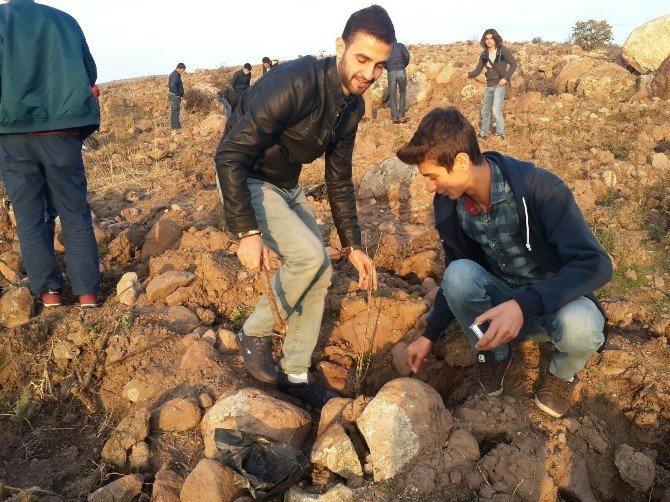 Üniversiteli Öğrenciler Gölet Çevresine Fidan Dikti