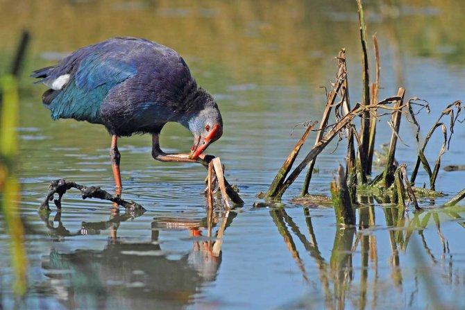 Kızılırmak Kuş Cenneti, Dünya Mirası Listesi'ne girmeye hazırlanıyor