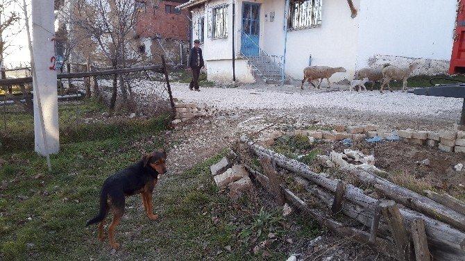 Köpek Hırsızları Vatandaşları Bezdirdi