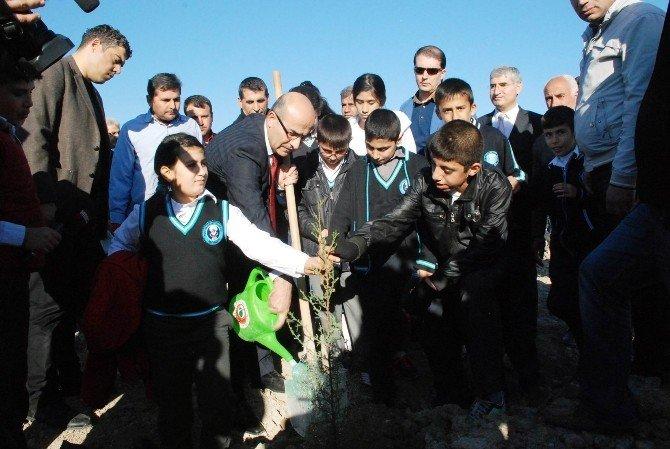 Öğrenciler, Kağıt İçin Kesilen Ağaçlara Karşılık Fidan Dikti
