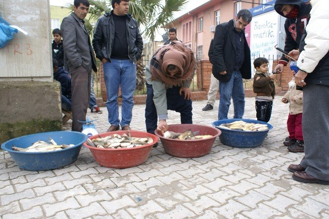 Atatürk Baraj'ında Avlanan Balıklar Büyük İlgi Görüyor