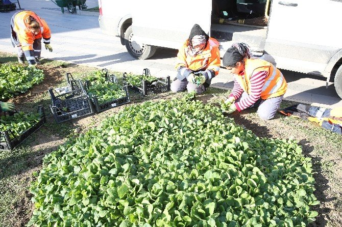 Adapazarı Belediyesi Çiççeklendirme Çalışması Başlattı