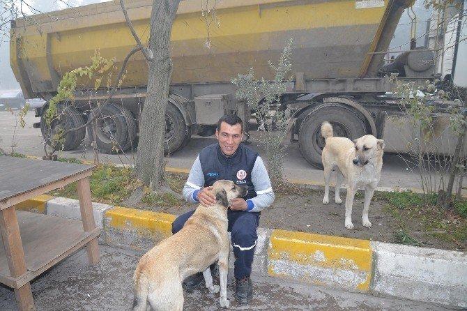 Sokak Hayvanları Islah Ediliyor