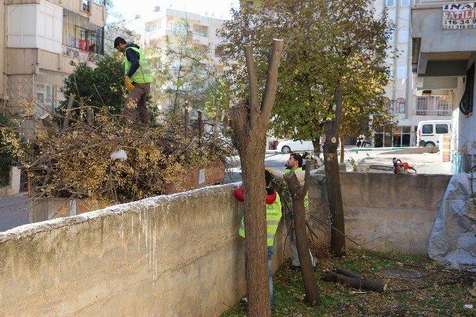 Haliliye'de Ağaç Bakım Ve Budama Çalışmaları Sürüyor