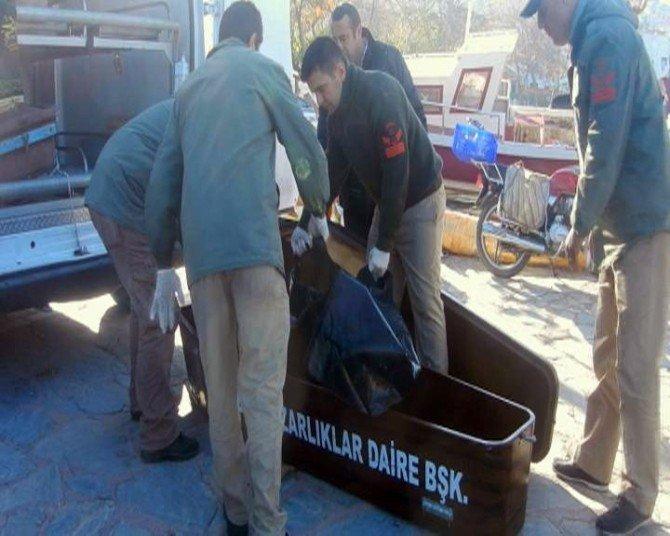Ege Denizi'nde Göçmen Faciası: 8 Ölü