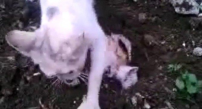 Ölen Yavrusunu Defneden Anne Kedinin Görüntüleri İzleyenleri Duygulandırıyor