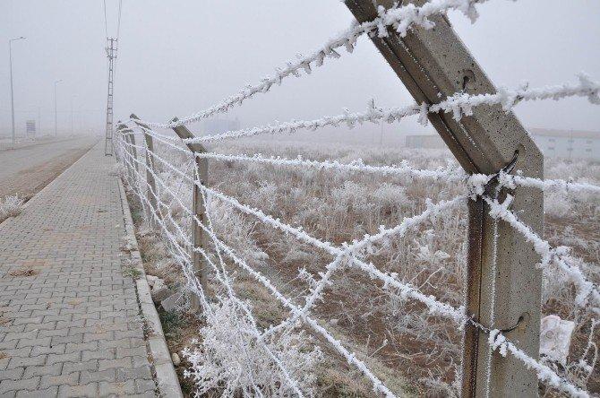 Gemerek'te Sis Ve Soğuk Hava Etkili Oldu