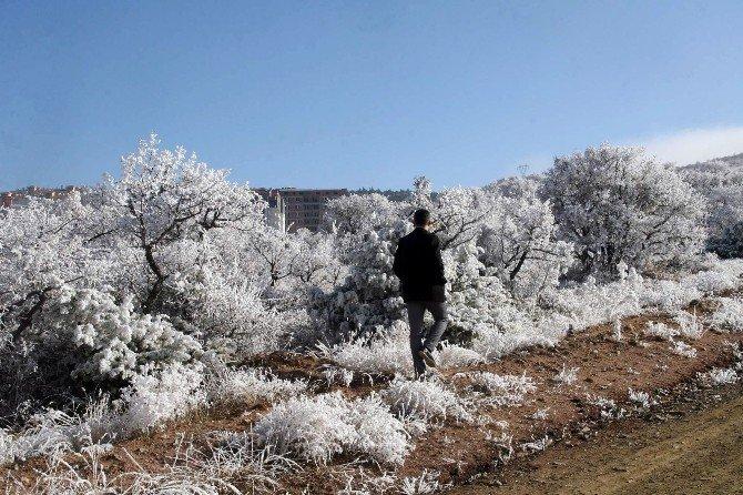 Yozgat'ta Sis Ve Kırağı Kartpostallık Görüntü Oluşturdu