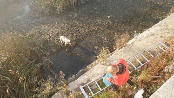 Çamura saplanan köpeği vatandaşlar kurtardı