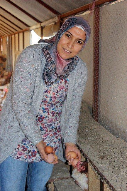Çocuklarının Yumurta İhtiyacı Anneye Çiftlik Kurdurdu