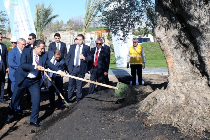 Bakan Çelik'ten EXPO 2016 alanına 775 yıllık zeytin ağacı