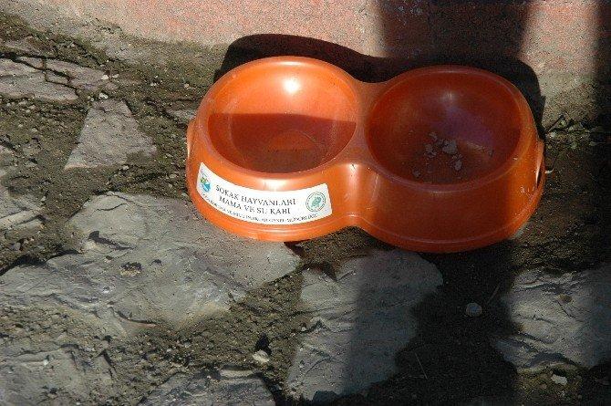 Küre Belediyesi'nden Sokak Hayvanları İçin Parklara Su Ve Mama Kabı