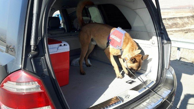 Jandarma Narkotik Köpeklerle Uyuşturucu Aradı