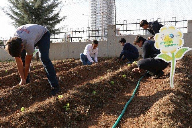 Öğrenciler, Ekolojik Tarımla Tanıştı
