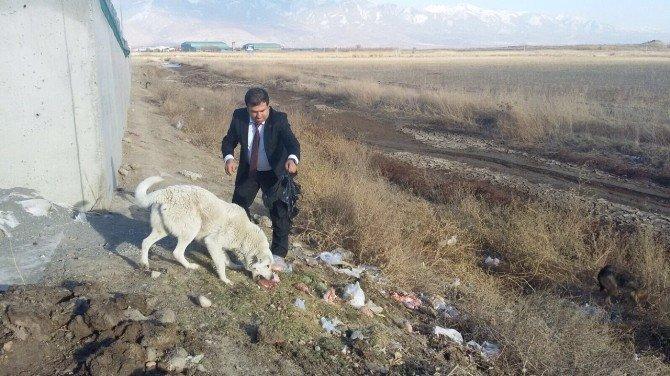 Yaban Hayvanları İçin Doğaya Yem Bırakıldı