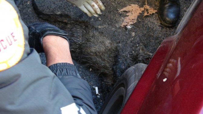 Kazada yaralanan kediyi kurtarmak için seferber oldular