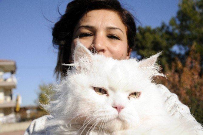 Evde Kedi Beslemeye Mahkeme Onayı