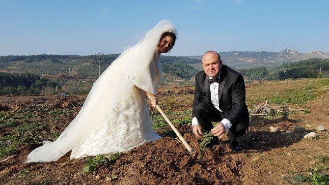 Düğünden Önce Gelinlik Ve Damatlıkla Fidan Dikmeye Koştular