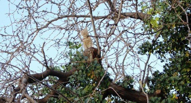 İtfaiye Kediyi Ağaçta Bıraktı