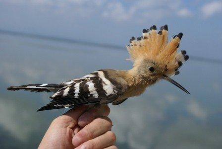 Kış Ortası Su Kuşu Sayımı Eğitimi