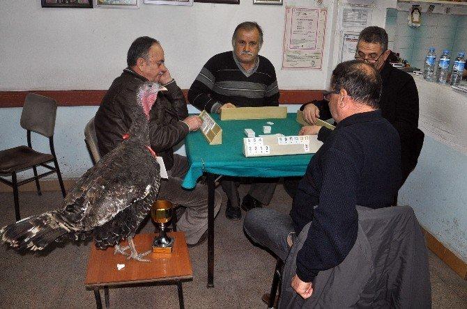 Zonguldak'ta Hindili Okey Turnuvası