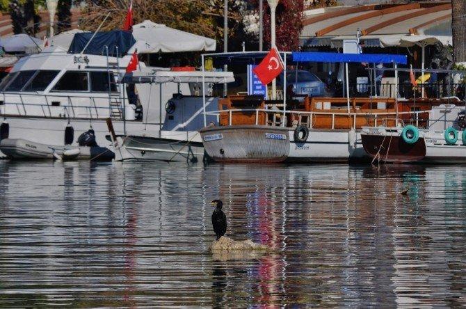 Heykel Gibi Duruyor
