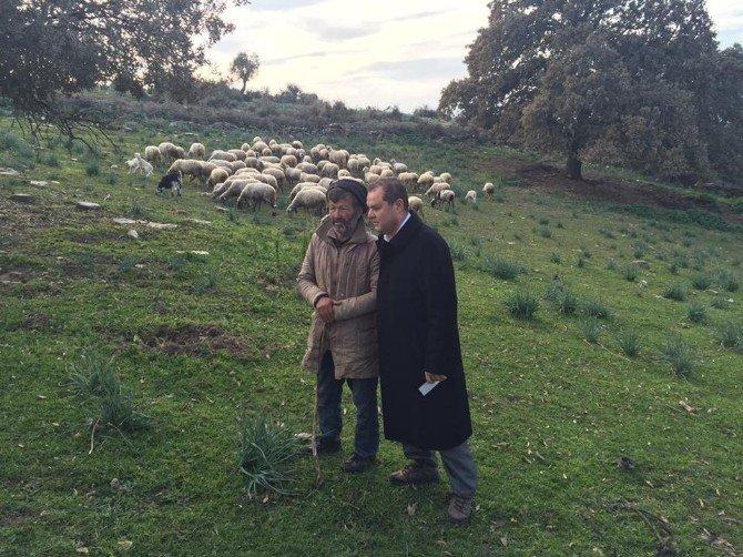 Aydınlı Vekil, Çobanla Koyun Otlatma Sözünü Tuttu