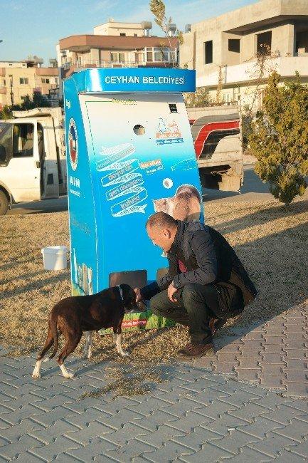 Ceyhan'da Sokak Hayvanları Geri Dönüşümle Besleniyor