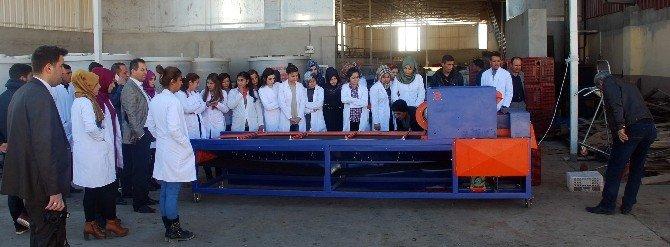 Nizip MYO' Dan Sofralık Zeytin İşletmesine Teknik Gezi