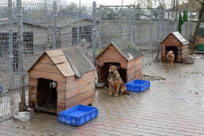 Beylikdüzü'nde Sokak Hayvanları Da Karın Tadını Çıkaracak