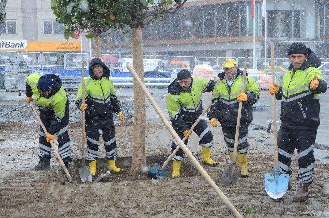 Taksim'de İşçiler, Yoğun Kar Yağışı Altında Manolya Ağaçlarını Dikti