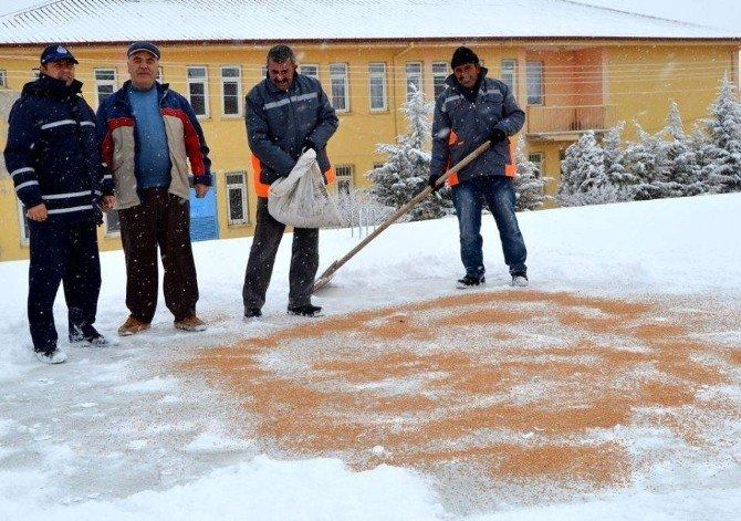 Yazıhüyük Belediyesi Kuşlara Yem Köpeklere Ekmek Dağıttı