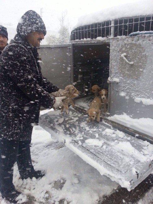 Kocaeli'de Sokak Hayvanları Unutulmadı