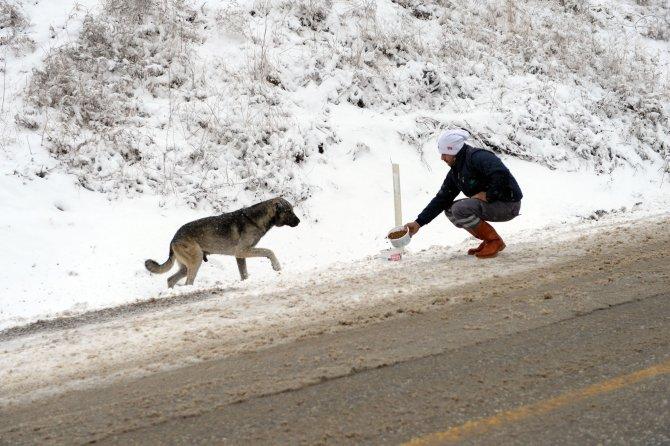 Uludağ'daki sahipsiz hayvanlar beslendi