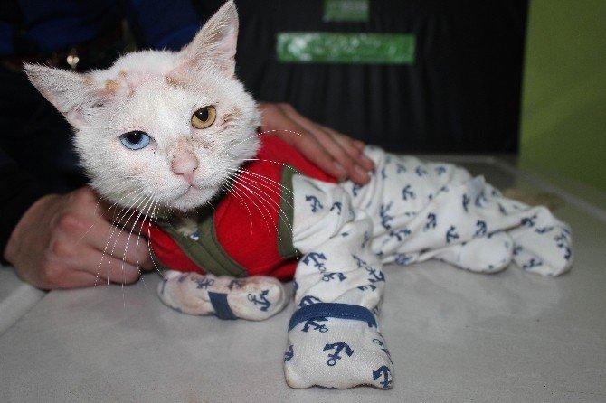 Kediye Pijamalı Tedavi