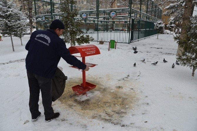 Sokak Hayvanlarına Ve Kuşlara Belediyeden Gıda Desteği