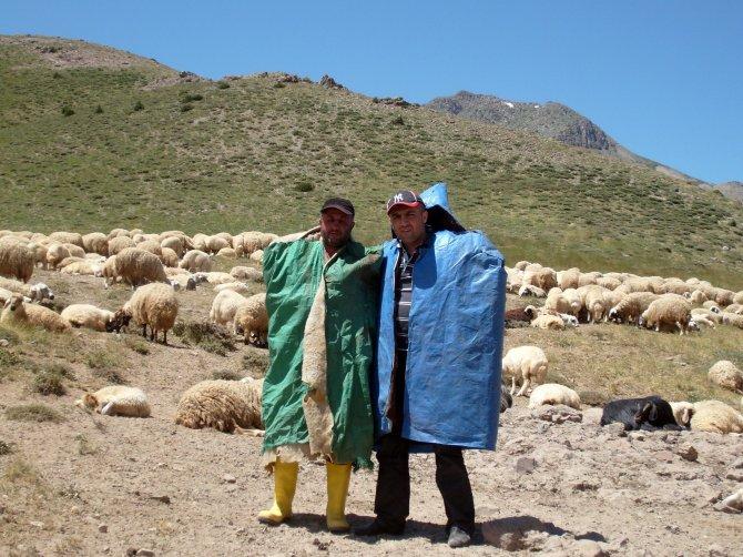 600 çoban, sertifikalı koyun otlatıyor