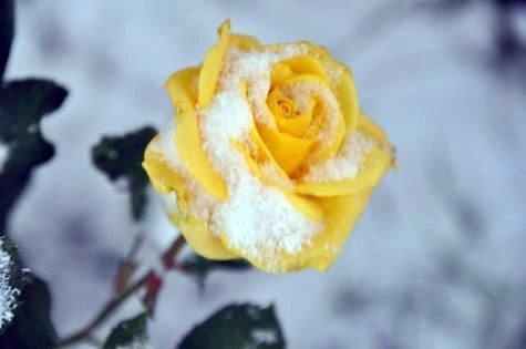 Viranşehir'de Kar Yağışı Başladı