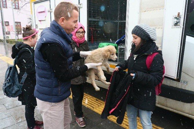 Liseli Öğrenciler, Tedavi Ettirdikleri Yavru Köpeği Sahiplendi