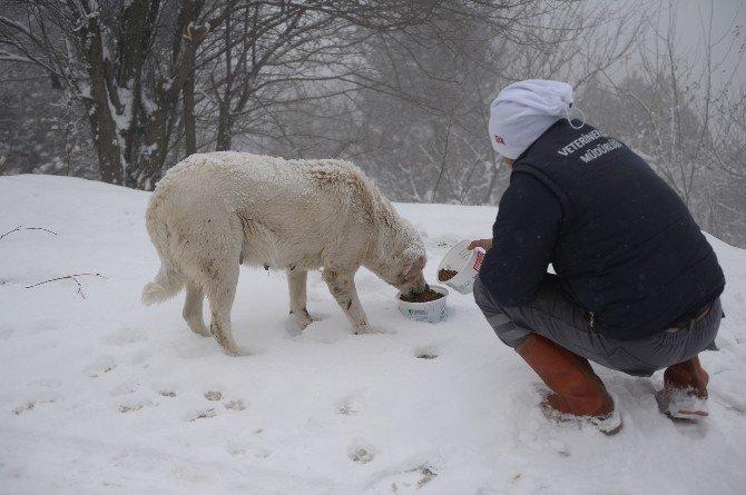 Uludağ'da Karda Aç Kalan Hayvanlara Yiyecek