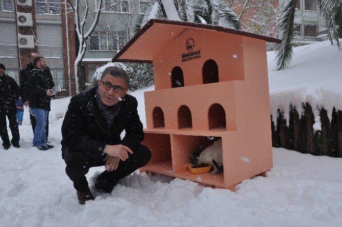 Kediler Kışı Sıcak Yuvalarında Geçirecek