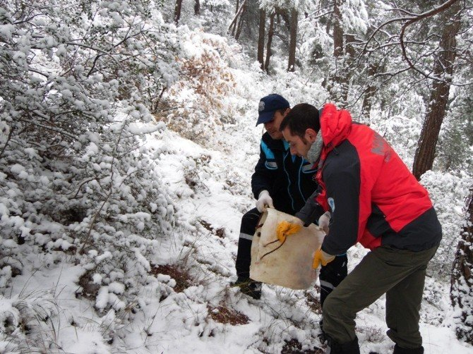 Bursa'da Karda Aç Kalan Yaban Hayvanlarına Yem