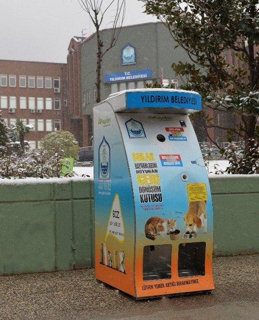 Yıldırım Belediyesi'nden Sokak Hayvanlarına Şefkat Eli