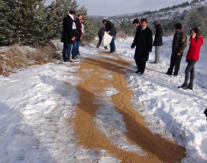 Yozgat'ta yaban hayvanları için doğaya yiyecek bırakıldı