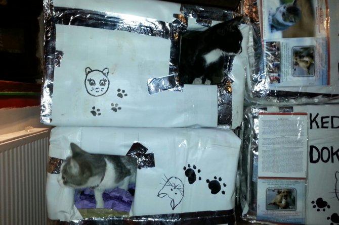 Sokak kedileri 'Kedi evleri' sayesinde artık üşümeyecek