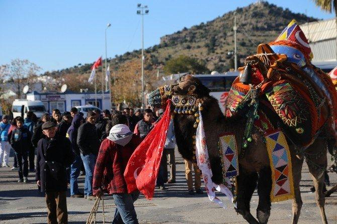 Bodrum Deve Güreşi Festivali Kortej İle Başladı